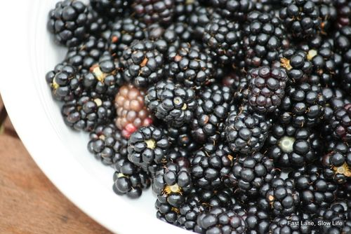Wild Blackberries